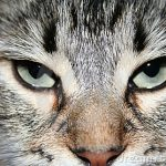cats-face-4315737